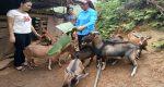 Hà Giang: Thu nhập trên 200 triệu đồng mỗi năm từ chăn nuôi tổng hợp
